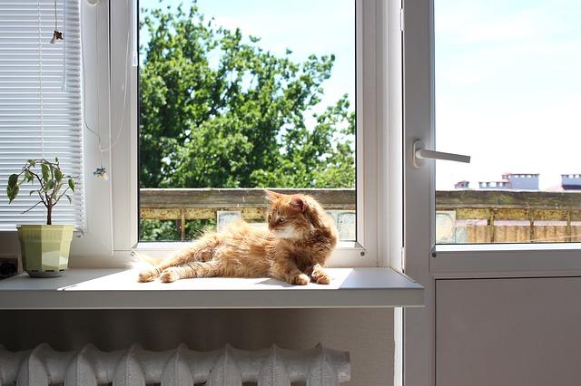 macska hűtése nyáron
