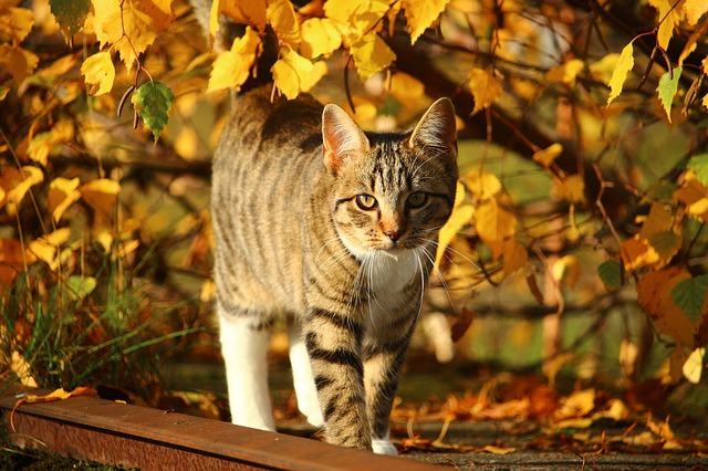 cica gondozása ősszel