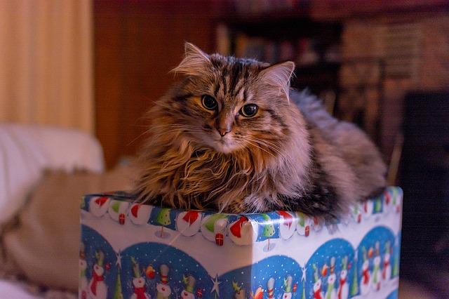 Csacska Macska születésnap