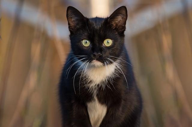 tabletta beadása macskának 1