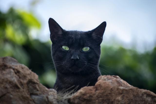 tabletta beadása macskának 4