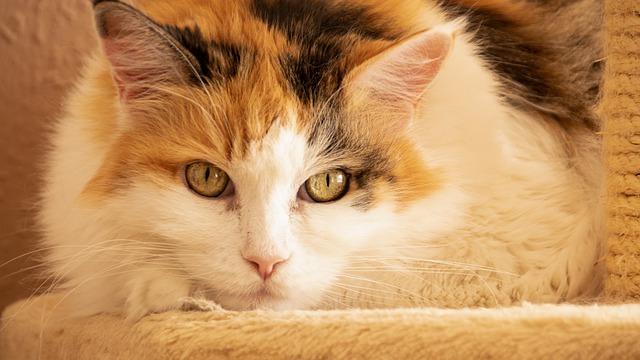 teknőctarka macska tulajdonságai
