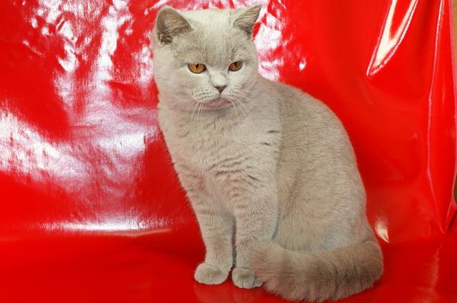 Szilikonos macskaalom vélemény 1