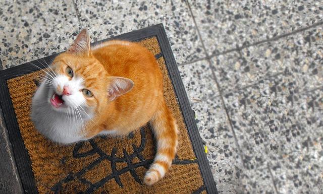 Szilikonos macskaalom vélemény 2