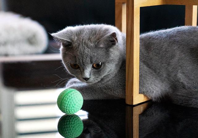macska labda