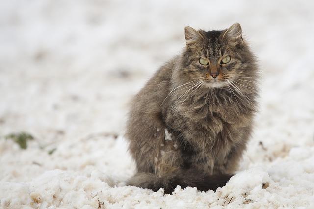 szilikonos macskaalom vélemény