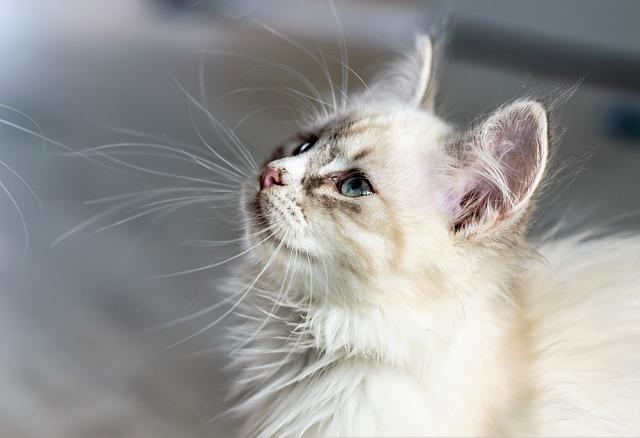 Macska vemhesség tünetei 1