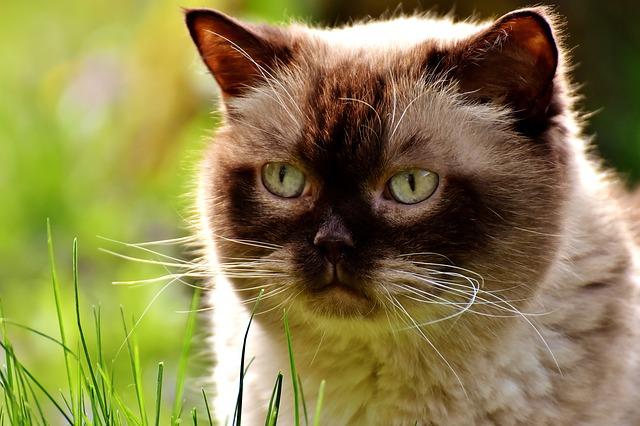 N&D macskatáp vélemények – N&D bárány áfonya