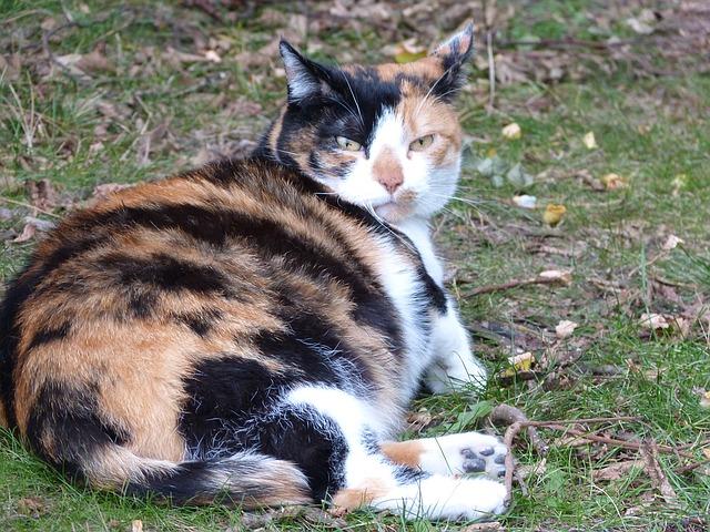 macska vemhesség tünetei 3