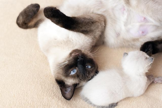 Macska nem gondozza a kölykeit