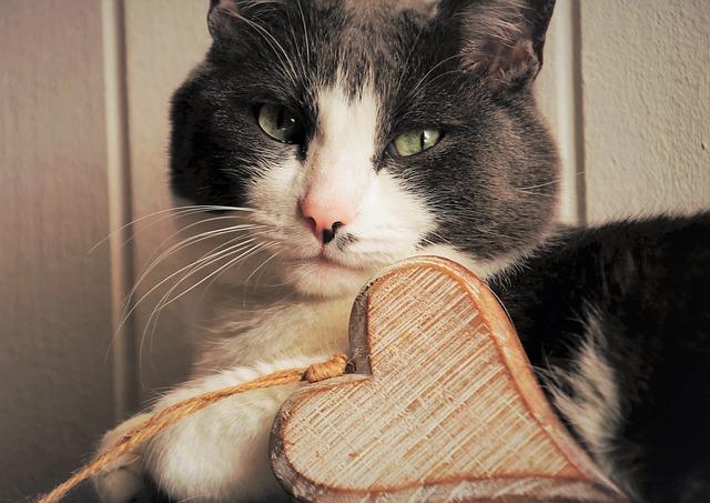 Macska szeretet jelei 1