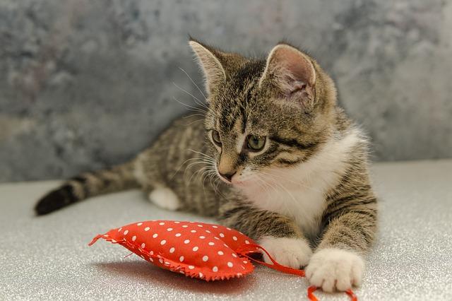 Macska szeretet jelei 3