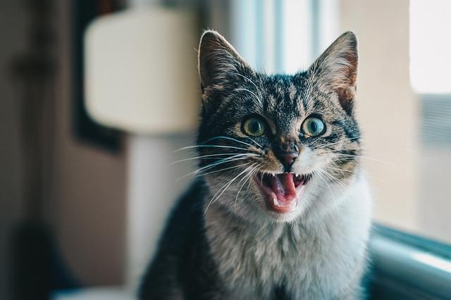 Miért támad a macska a gazdájára