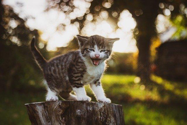 Miért támad a macska a gazdájára 2