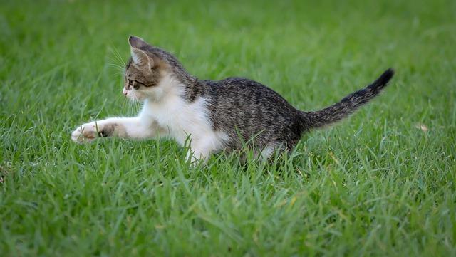 kihez megy a macska 3