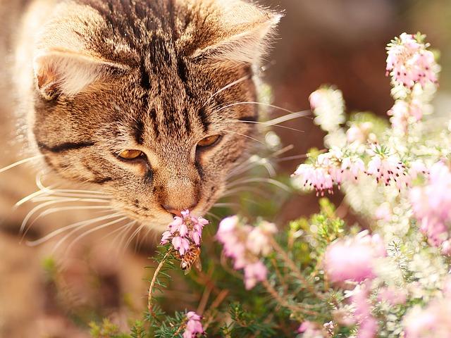 macska szaga