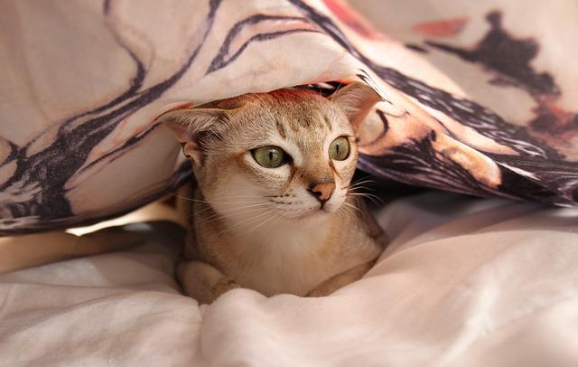 macska hasmenés ellen