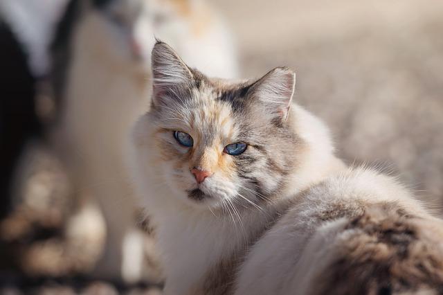 macska hasmenés kezelése otthon