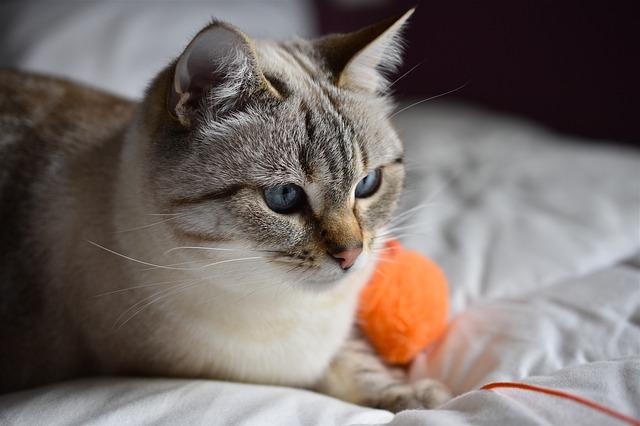 a macskák rühének kezelése