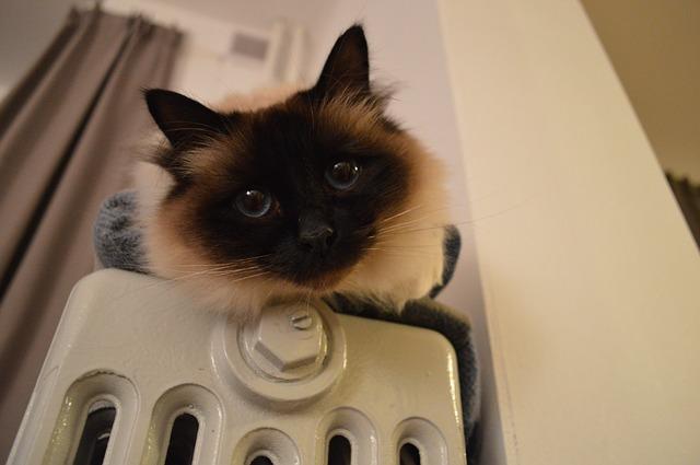mit-tegyek-ha-a-macskám-megfázott-1