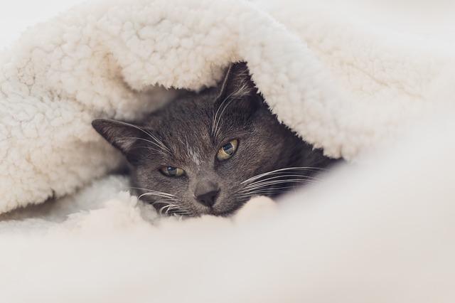 mit-tegyek-ha-a-macskám-megfázott-3