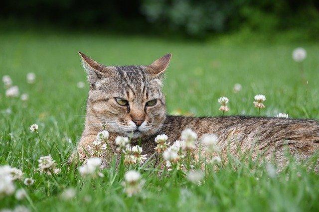 3--milyen-érzéseket-tud-kifejezni-a-macska-a-fülével