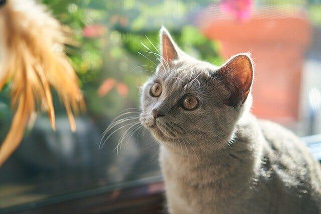 macska-dorombolás-jótékony-hatása-