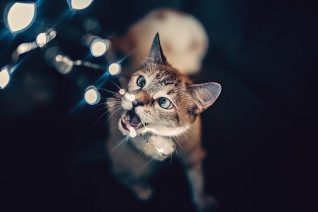 macska-harapdál-1