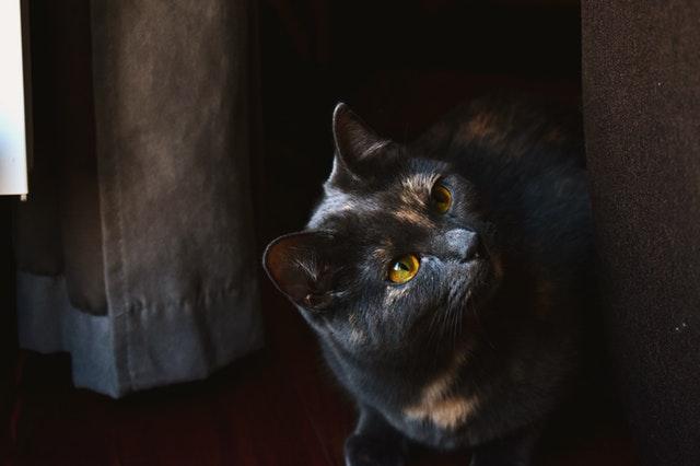macska-nem-az-alomba-kakil-3