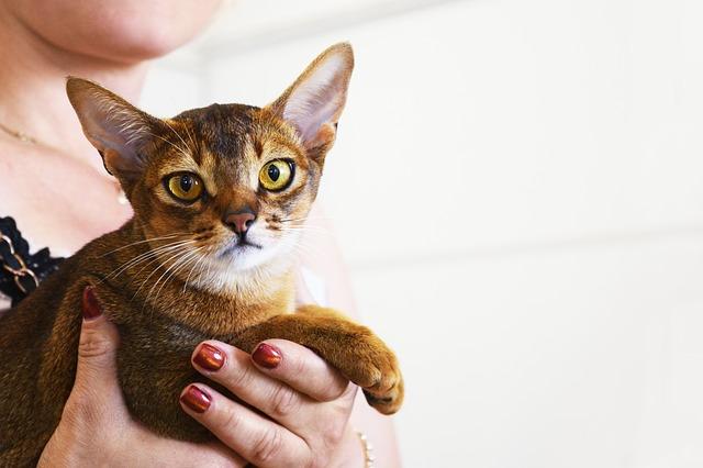 macska-nem-az-alomba-kakil
