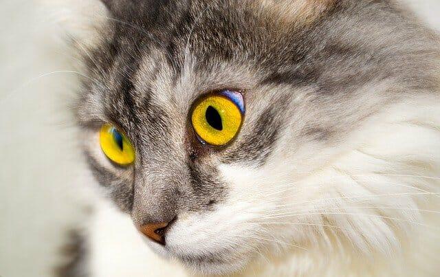 macska-szeme-csipás-