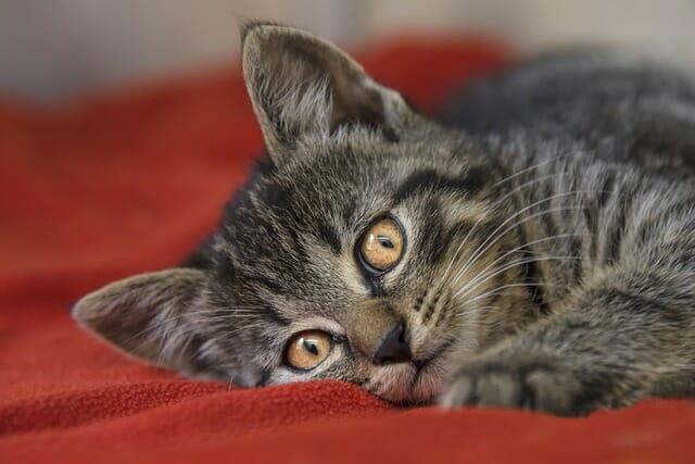 macska-szeme-csipás