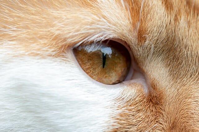 macska-szeme-folyik