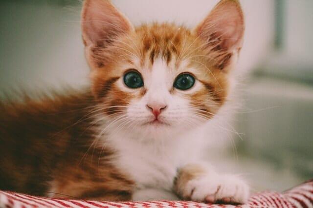 miért-hagyja-el-a-macska-a-kölyekeit