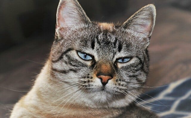 nem-szeret-a-macskám-