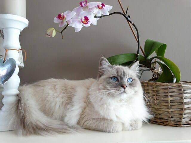 macska-etetése-naponta-hányszor