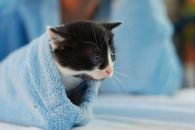 macska-szőrcsomó-köhögés-