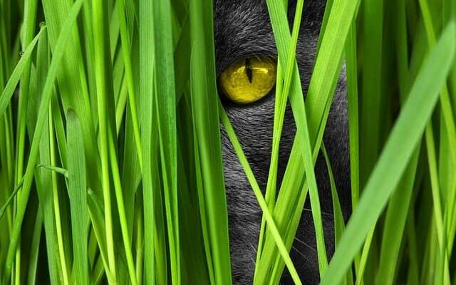 macska-szőrcsomó-köhögés