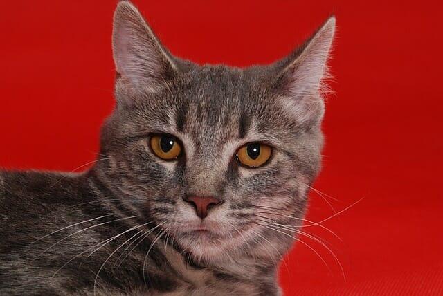 semmit-nem-eszik-a-macska