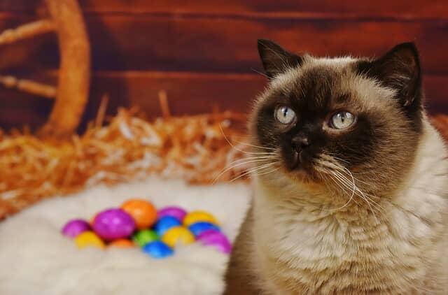 húsvéti-cicás-képek