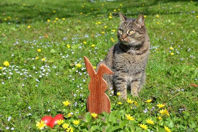 húsvéti-cica-