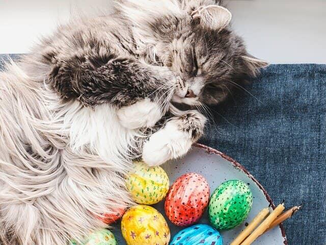 húsvéti-cica