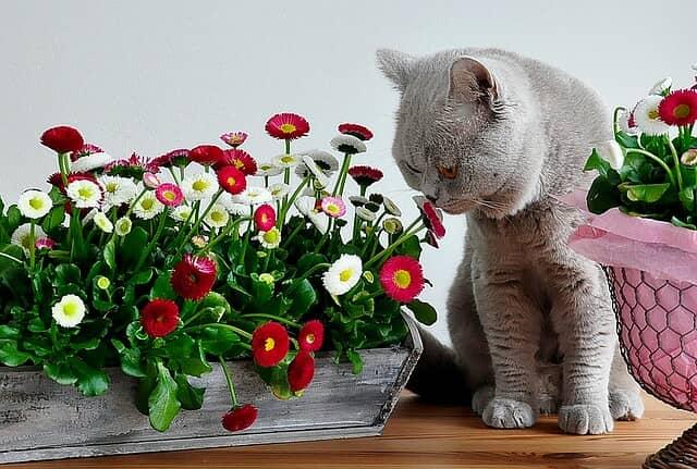 különleges-ízesítésű-macskaeledel