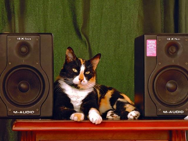 macska-fegyelmezése-