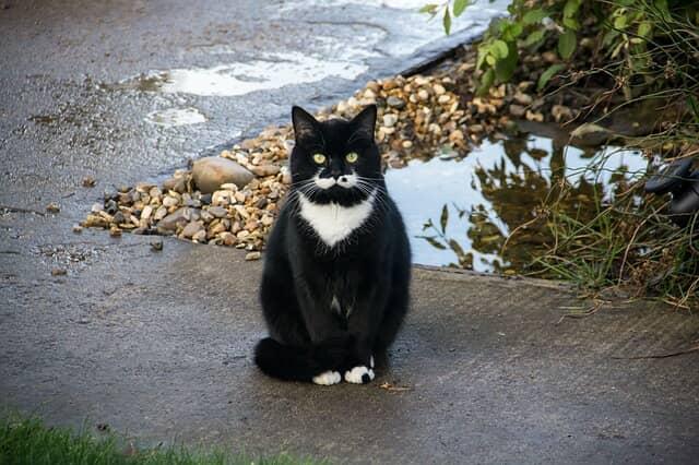 macska-széklet-gyakorisága