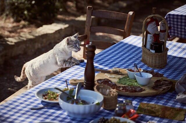 mit-nem-ehet-a-macska--
