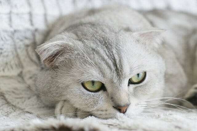 mit-nem-ehet-a-macska