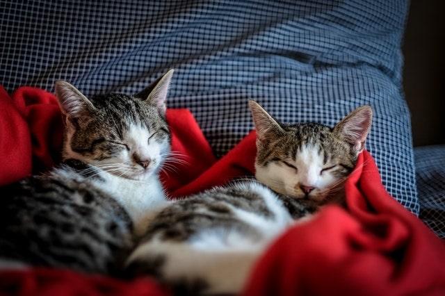 macskával-alvás-veszélyei-