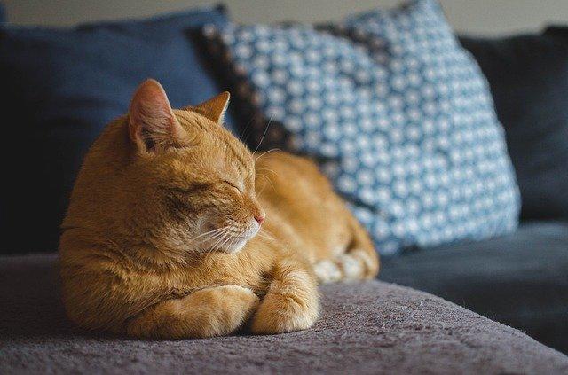 macskával-alvás-veszélyei