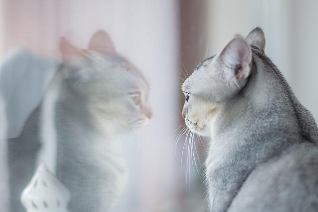 macska-féltékenység-kezelése-